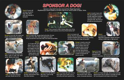 Sponsor a Dog