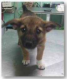 agusto-male-1-month-old-curious-and-submissive-soon-for-adoption