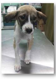 mariechi-female-1-month-old-highly-active-and-soon-for-adoption
