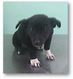 migor-male-1-month-old-highly-submissive-and-soon-for-adoption