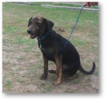 thunder-male-4-months-old-complete-vaccine-neutered-and-playful