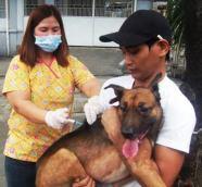 Anti rabies vaccination